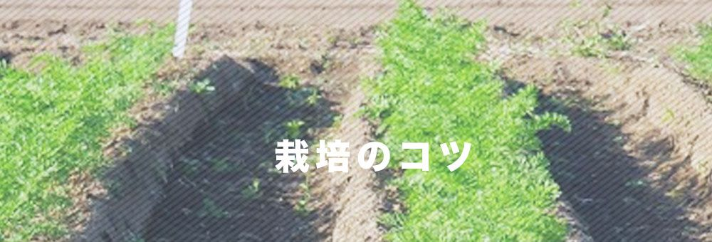 栽培のコツ